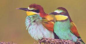 tour de naturaleza aves Ronda