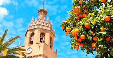 colegiata de Ronda y naranjos