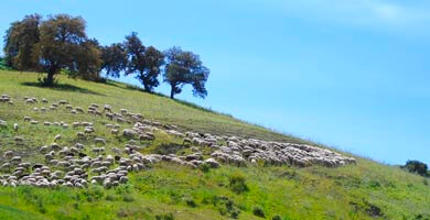 La campagne à côté de Ronda, Espagne
