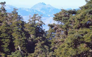 Hiking in Sierra de las Nieves Natural Park