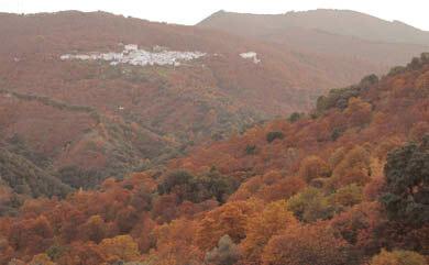 Chestnut valley Ronda hike